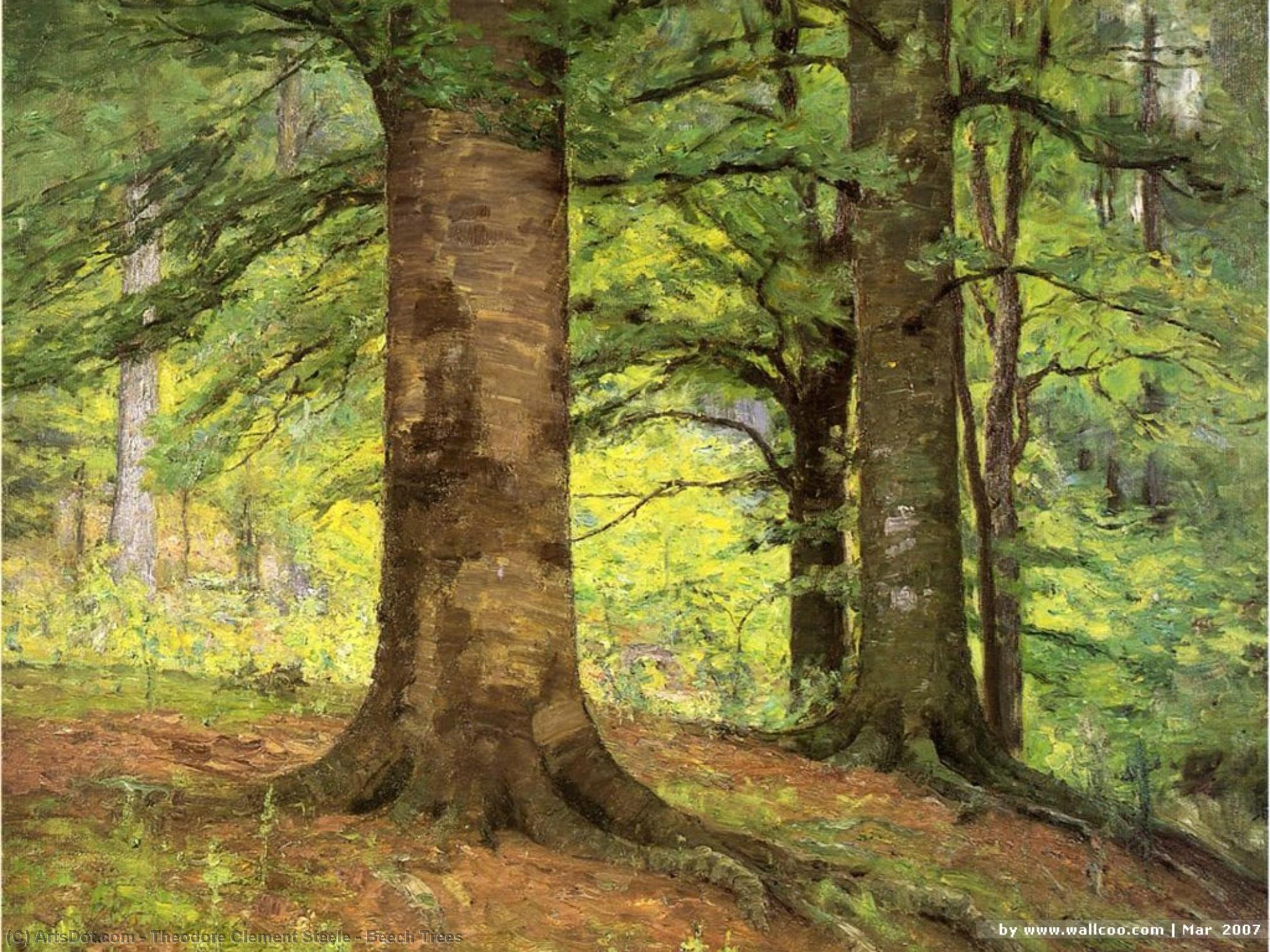 Wikioo.org - The Encyclopedia of Fine Arts - Painting, Artwork by Theodore Clement Steele - Beech Trees