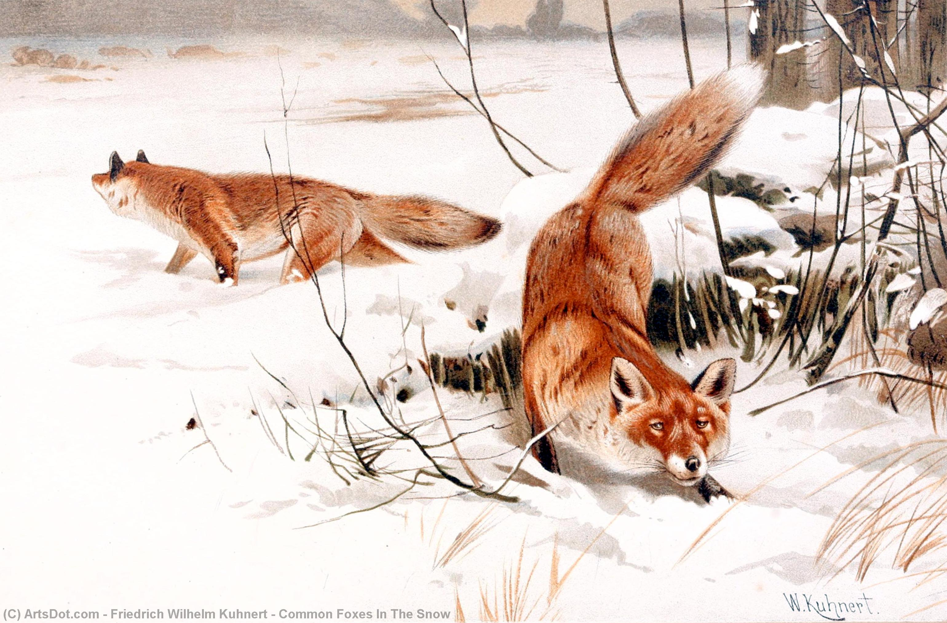 Wikioo.org - The Encyclopedia of Fine Arts - Painting, Artwork by Friedrich Wilhelm Kuhnert - Common Foxes In The Snow