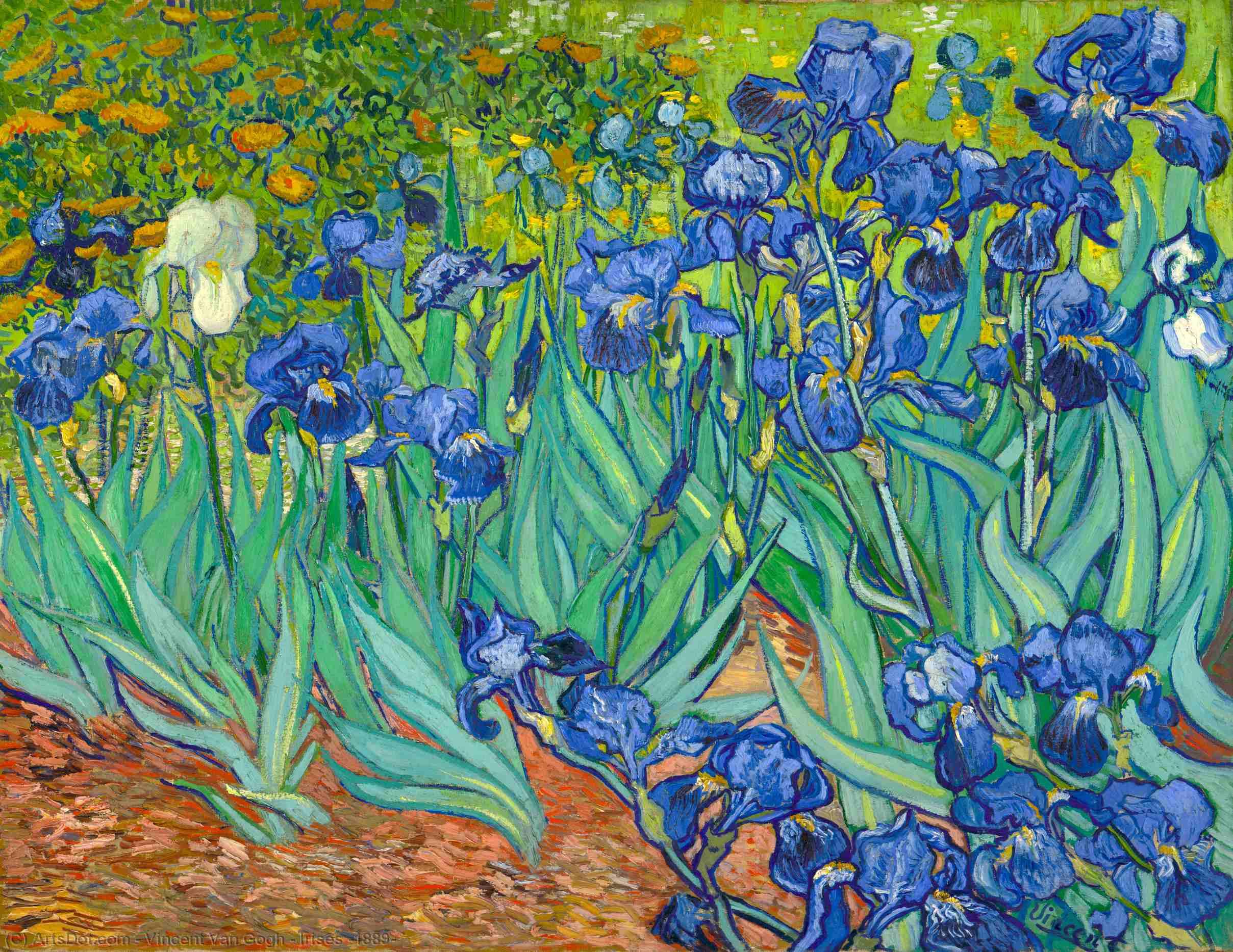Wikoo.org - موسوعة الفنون الجميلة - اللوحة، العمل الفني Vincent Van Gogh - Irises [1889]
