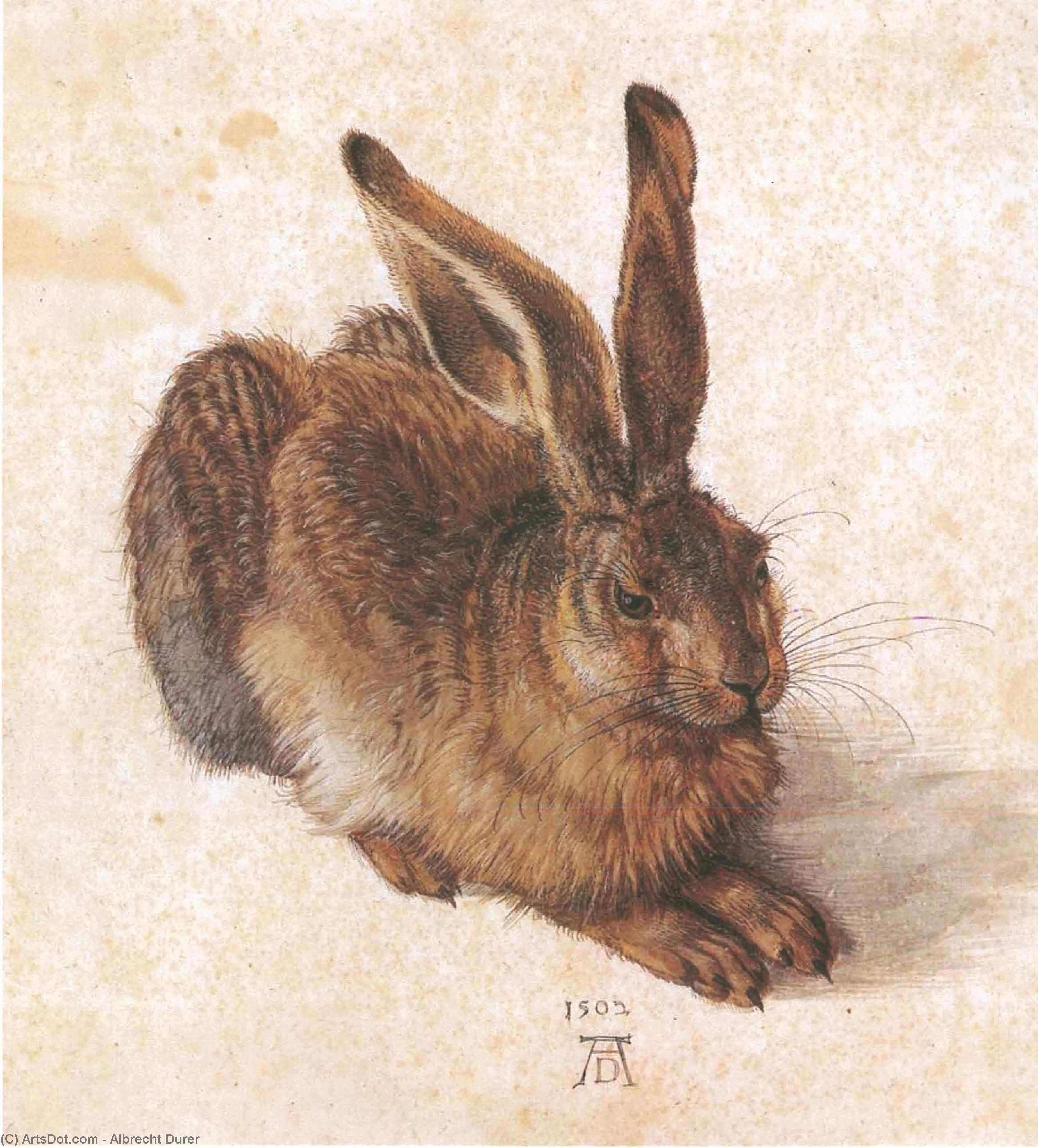 Wikioo.org - The Encyclopedia of Fine Arts - Painting, Artwork by Albrecht Durer - Young Hare