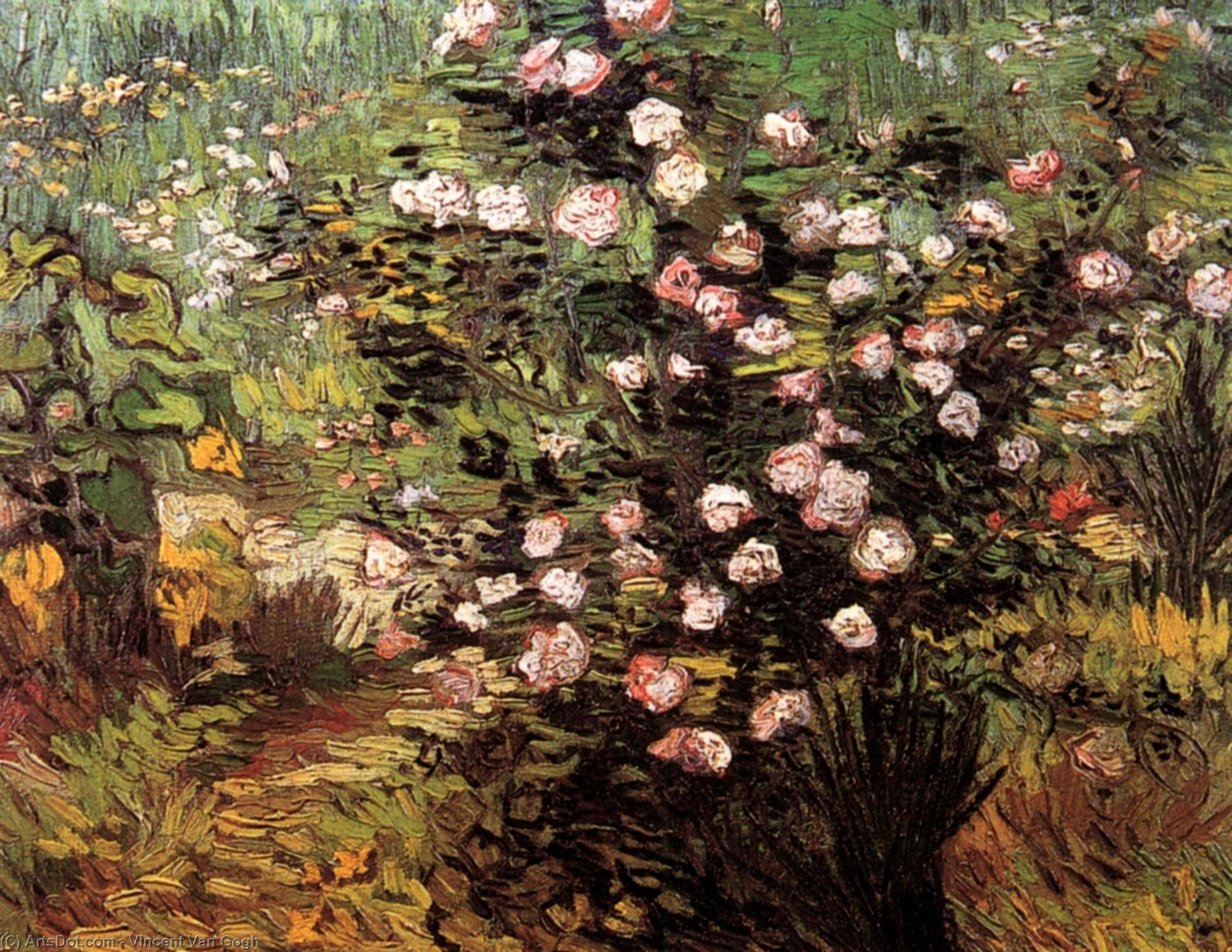 Wikioo.org - The Encyclopedia of Fine Arts - Painting, Artwork by Vincent Van Gogh - Rosebush i Blossom