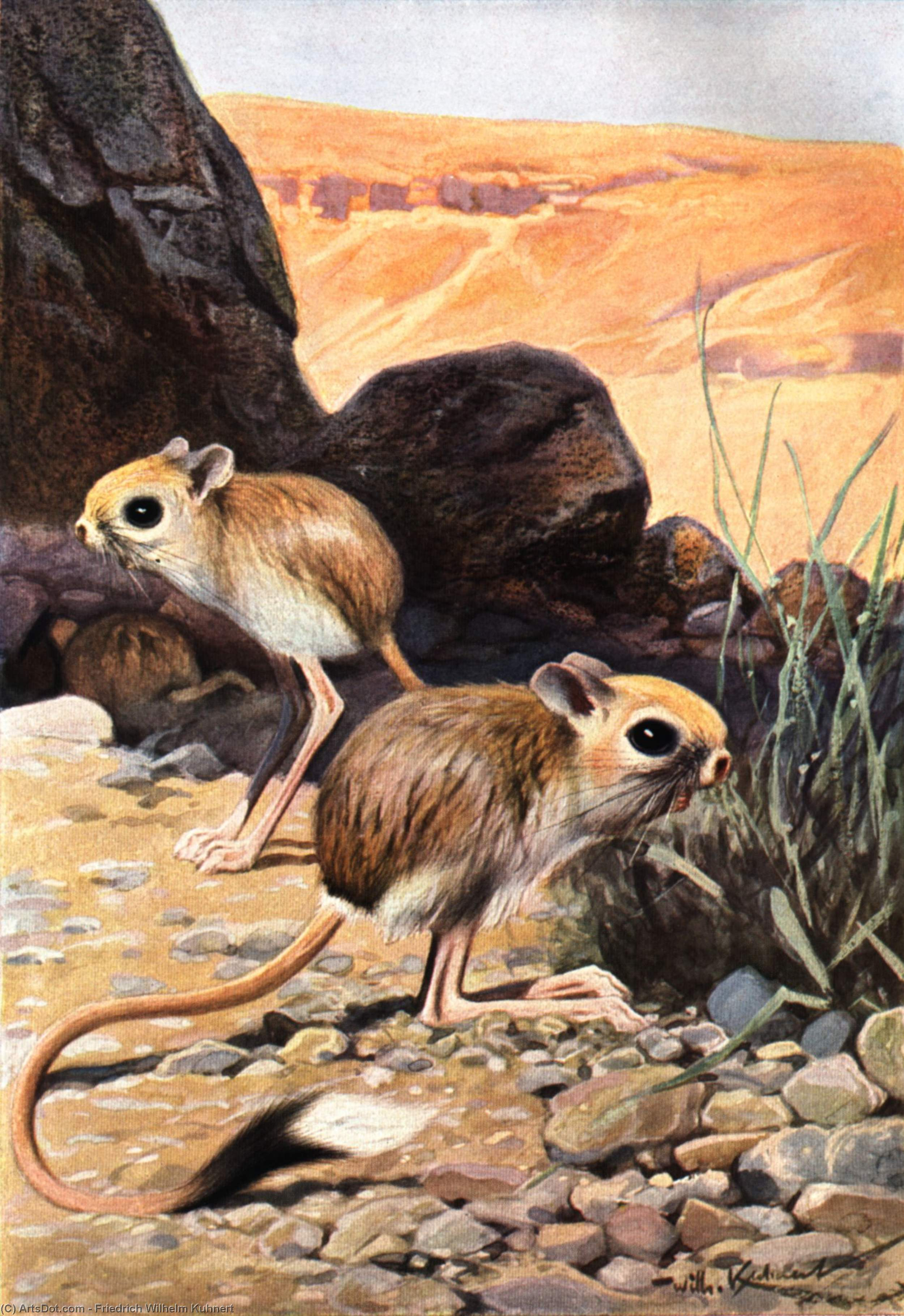 Wikioo.org - The Encyclopedia of Fine Arts - Painting, Artwork by Friedrich Wilhelm Kuhnert - Lesser Egyptian Jerboa