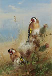 Goldfinches Among Thistles