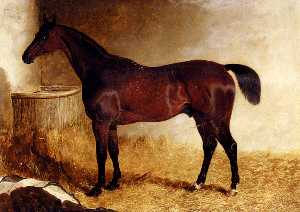 Flexible, A Chestnut Racehorse In A Loose Box
