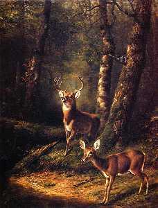 The Forest: Adirondacks
