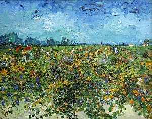 The Green Vineyard