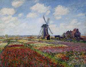 Fields of Tulip With The Rijnsburg Windmill