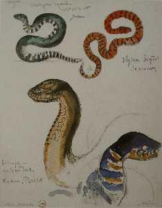 Four studies of snakes