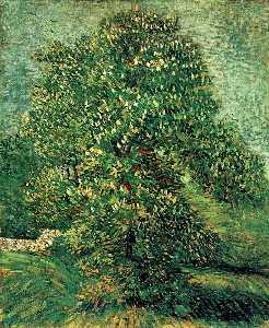 Chestnut Tree in Blossom