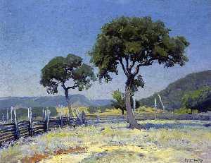 Live Oak Trees On Williams' Ranch, Bandera County
