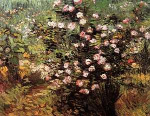 Rosebush i Blossom