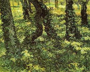 Trunks of Trees with Ivy