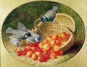 Bluetits Pecking At Cherries