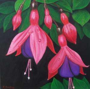 Raindrops On Fuchsia