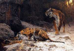 Tigers at a Drinking Pool