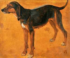 Rougeaude, chienne de la meute de Louis XIV