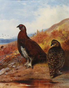 A Pair Of Red Grouse At The Water's Edge, In Moorland