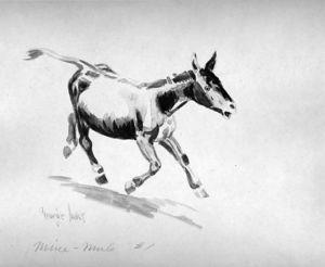 Mine-Mule