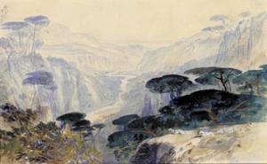 Cedars Overlooking The Valley, Galilea