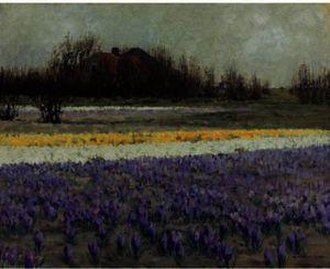 A field of crocuses