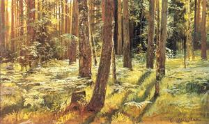 Ferms in a forest