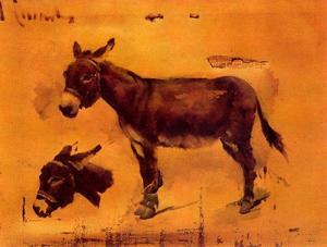 Studies Of Donkeys