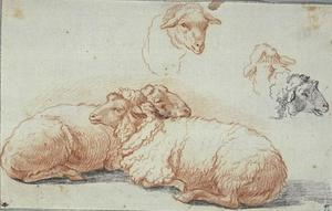 Two sheep lying down, and three studies of heads of sheep