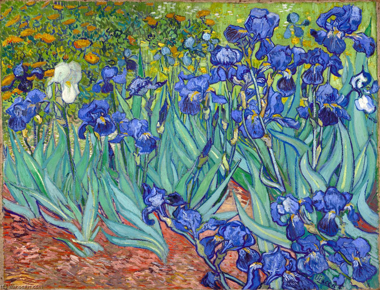 Wikioo.org - The Encyclopedia of Fine Arts - Painting, Artwork by Vincent Van Gogh - Irises