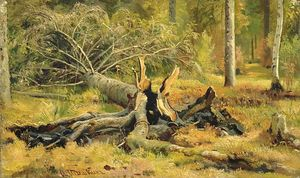 Fallen tree. Siverskaya