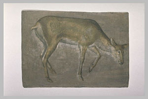 Sketch of deer doe