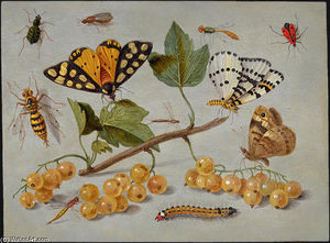 Butterflies and Insects