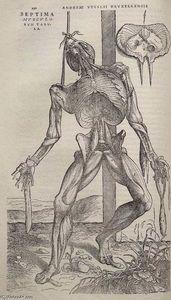 Wikioo.org - The Encyclopedia of Fine Arts - Artist, Painter  Andreas Vesalius
