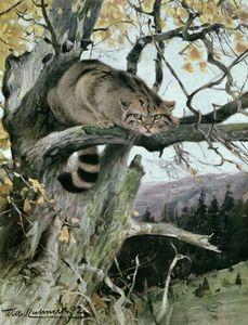 Wildcat In A Tree