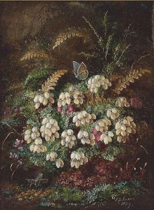 Heather And A Butterfly; And Primulas And Violas