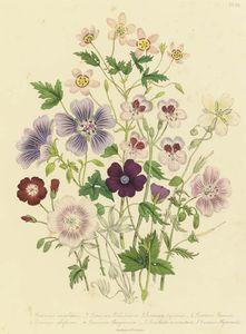 The Ladies' Flower Garden -