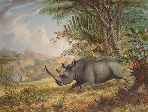 The Black Rhinoceros