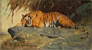 Auf Felsplateau Liegender Tiger