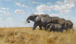 Elefanten Auf Der Wanderung