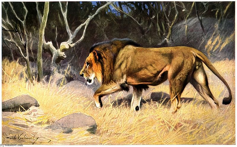 Wikioo.org - The Encyclopedia of Fine Arts - Painting, Artwork by Friedrich Wilhelm Kuhnert - Lion