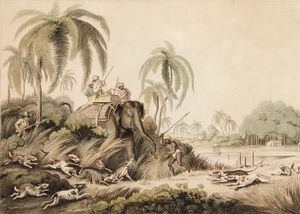 Hunting A Kuttauss, Or Civet Cat