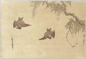 Birds And Wisteria