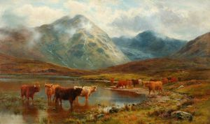 Scotch Cattle And Mist
