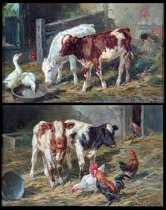 Farmyard Scenes With Calves, Chickens And Geese