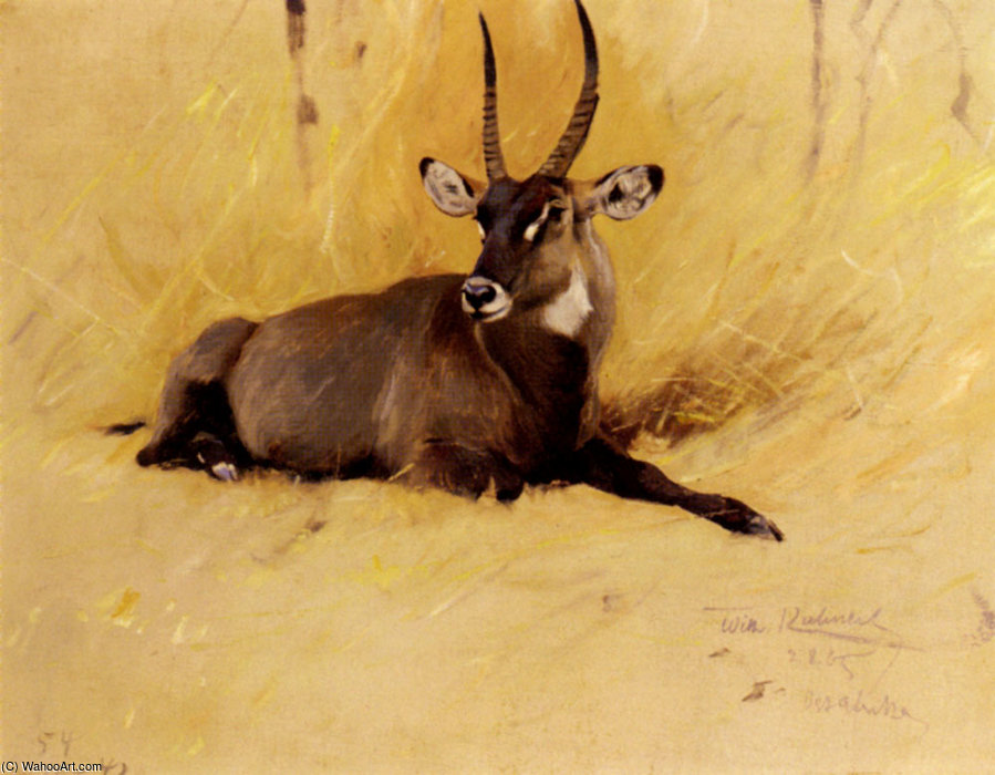 Wikioo.org - The Encyclopedia of Fine Arts - Painting, Artwork by Friedrich Wilhelm Kuhnert - A common waterbuck