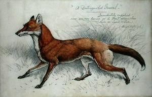 Basil Nightingale