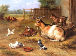 A farmyard Scene With Goats Chickens Doves
