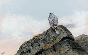 A greenland gyr falcon perched on rocks