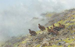 Red grouse on a scottish moor