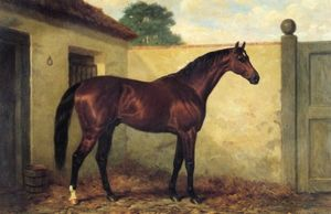 Kingcraft bay racehorse