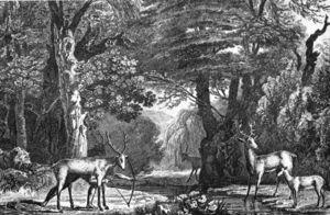 Timucua hunting deer